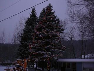 arbre-chateau-richer-022