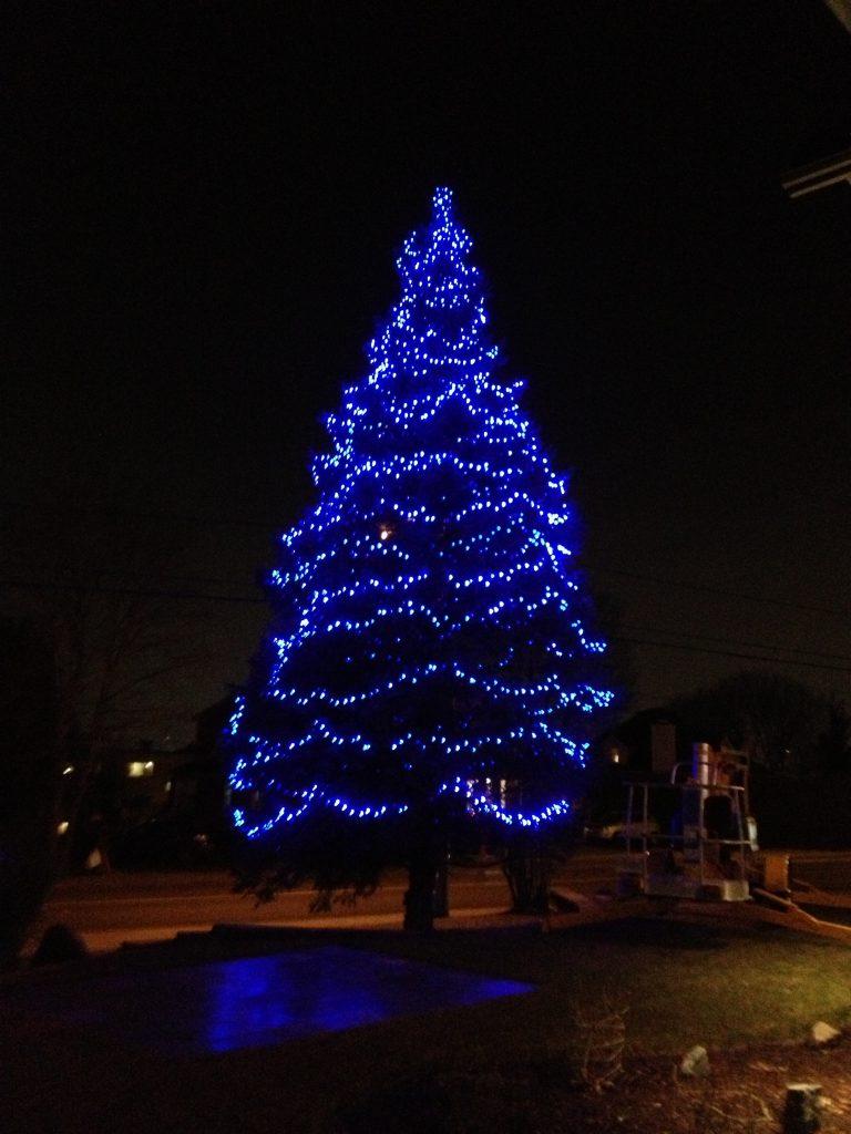 Pose de lumières fêtes de Noël.Installation dans sapins et arbres ...
