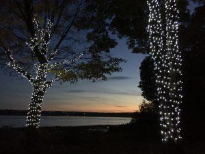 Poseur lumières en cordon sur des arbres